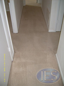 Residential carpet after hot water extractiion - Southern Maryland