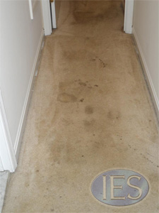 Hallway before carpet cleaning by IES Clean Pro - Dunkirk MD