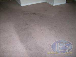 Residential Carpet Cleaning Southern Maryland