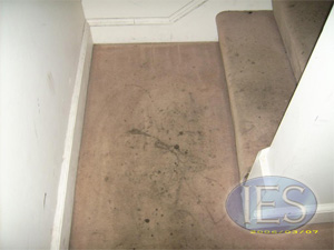 carpet before cleaning - Carpet Cleaning Dunkirk MD