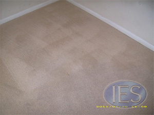 Residential carpet after hot water extractiion - Calvert County
