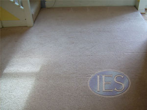 Residential Carpet Cleaning Dunkirk, Maryland - After cleaning process