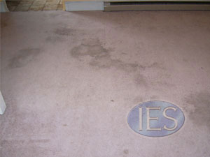 Residential Carpet Cleaning Dunkirk, Maryland - Before cleaning process