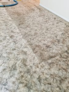25 year old carpet cleaned