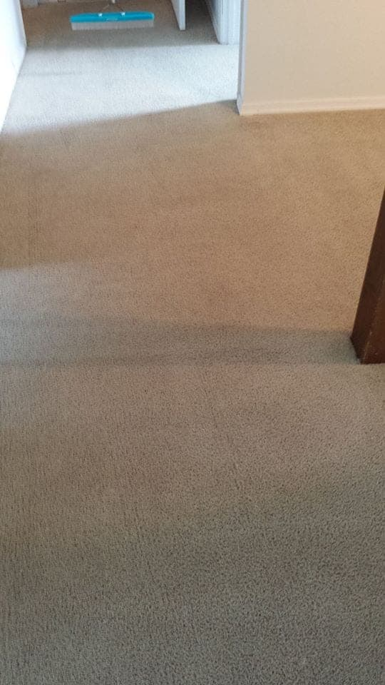 After Professional Carpet Cleaning