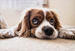 PETS AND carpet care
